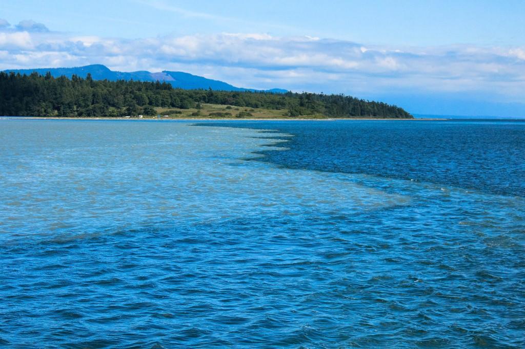 Whale Watching - San Juan Islands
